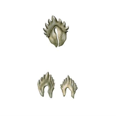 Particolare dei denti fossili.