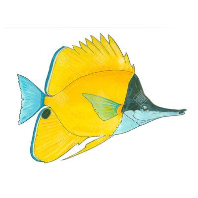 Pesce farfalla naso lungo