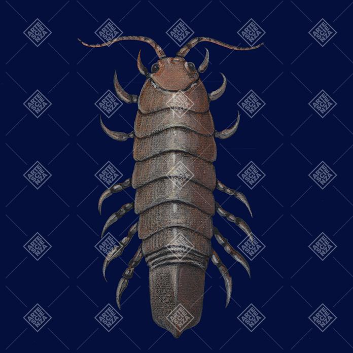 Isopodi