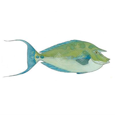 Pesce unicorno