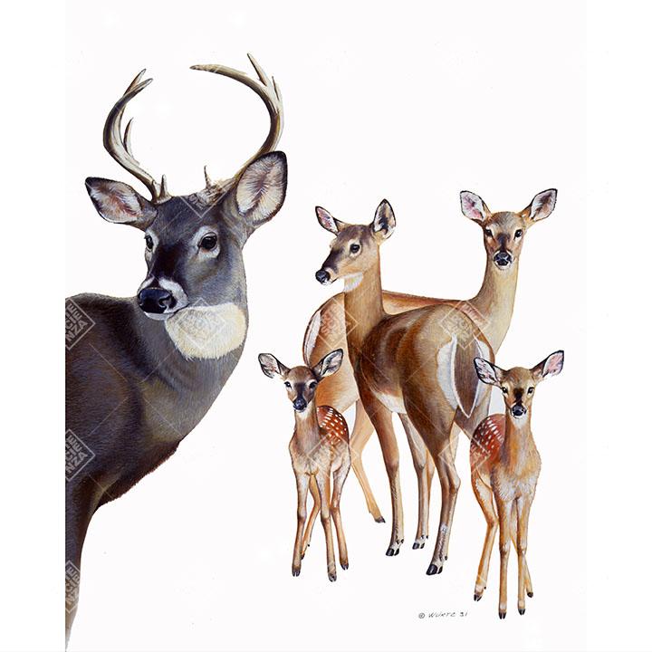 famiglia di Cervo della Virginia