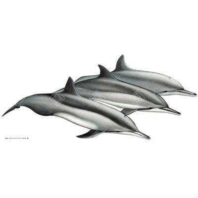 Stenella dal lungo rostro | Spinner dolphin