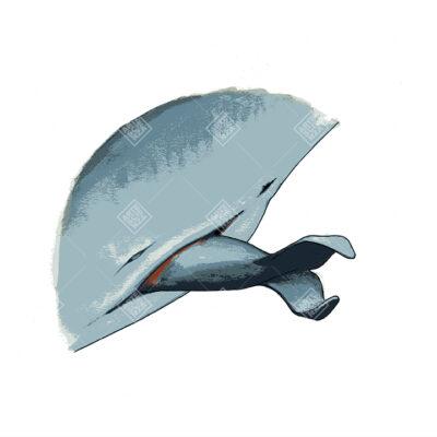Particolare della nascita di un cetaceo