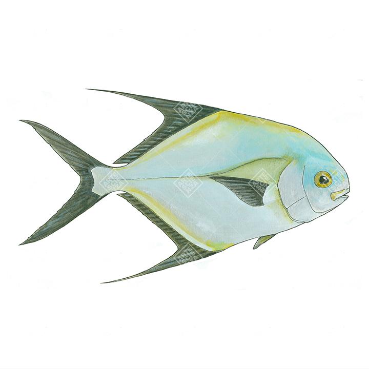 Pesce Pampano