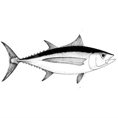 pesce Alalunga